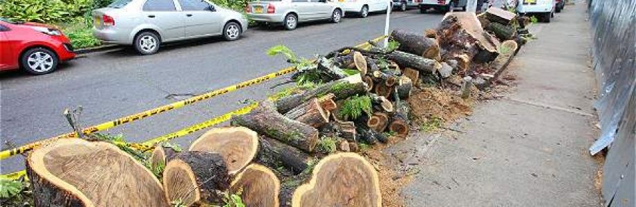 No hay arboricidio en Bogotá: Directora del Jardín Botánico