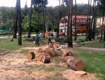 Se ha querido arrasar con los árboles sin mayor razón: Personera de Bogotá
