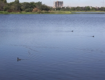 La administración Distrital tiene un enorme desafío para recuperar los humedales